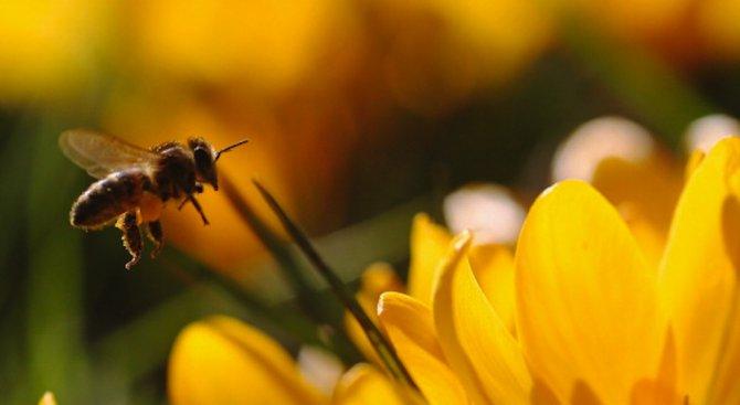 Синоптиците прогнозират пролетта и лятото да бъдат топли