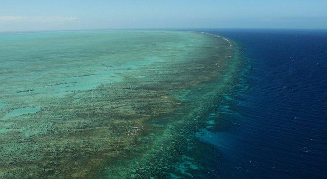 Големият бариерен риф е все по-застрашен от избелване на коралите