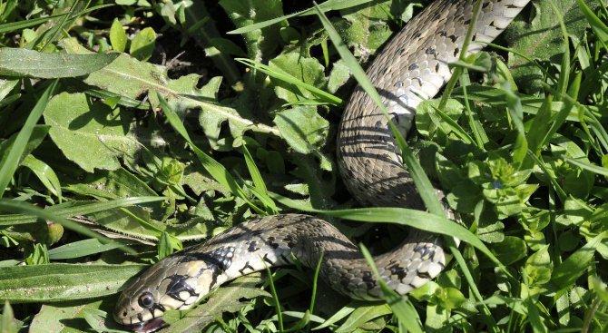 Хванаха змия в гараж