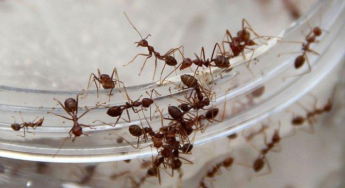 Обръснаха мравки, за да ги изследват