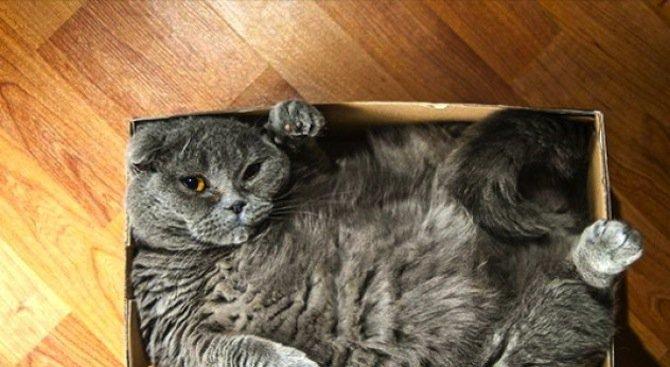 Защо котките обичат празните кутии