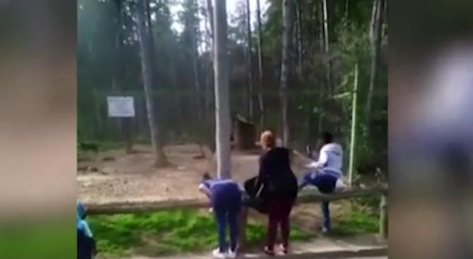 Разследват трима, хвърляли камъни по животни в зоопарк