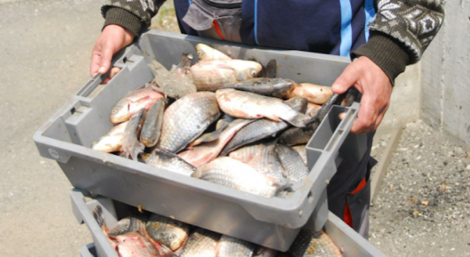 Скубят ни здраво за прясна риба по морето