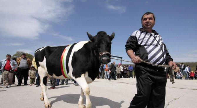 Евтаназираха 21 крави в община Тунджа