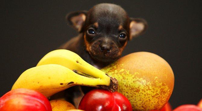 Кажи ми какъв плод ядеш и ще ти кажа какъв си