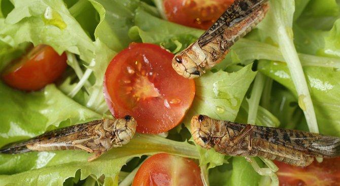 Българка отглежда щурци и червеи, приготвя ястия с тях (видео)