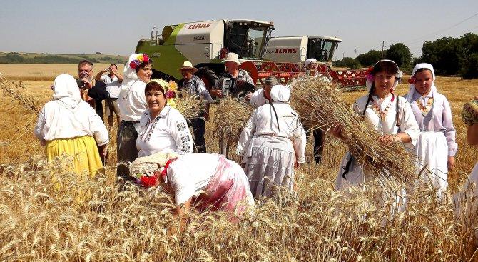 Зърното по-евтино с 25%
