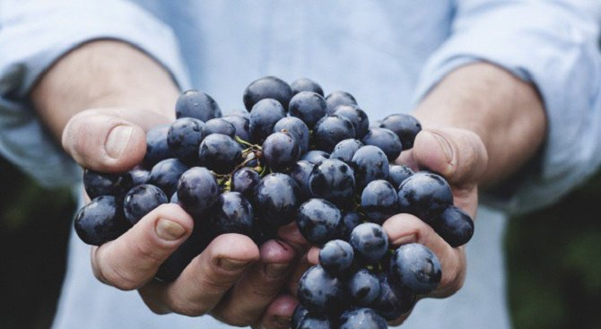 Яжте тези плодове за красива кожа