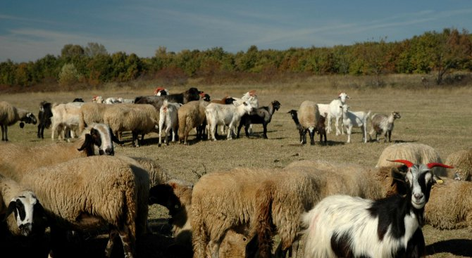 БАБХ изплати 1,3 милиона лева на ветеринарни лекари