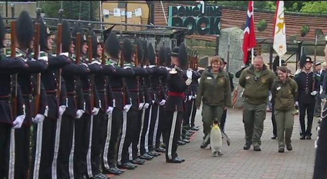 Пингвин стана генерал (видео)