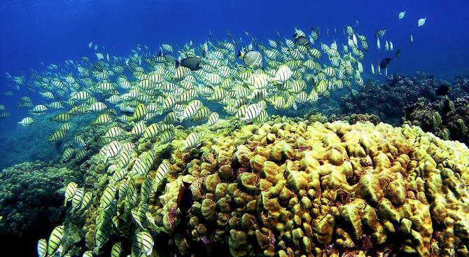 Океанограф ще принтира коралови рифове на Карибите