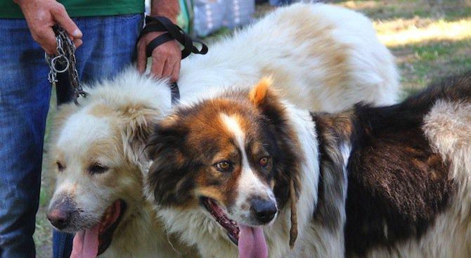 Куче помага на болни от рак деца в Пловдив
