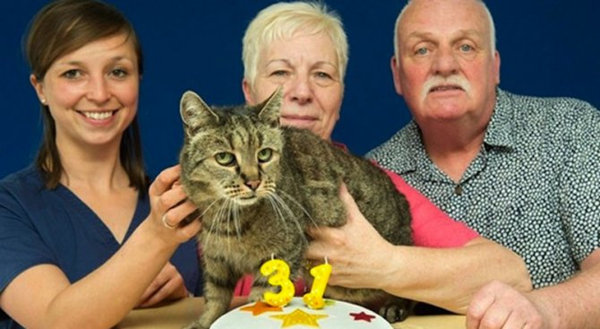 Най-възрастната котка на планетата навърши 31 години