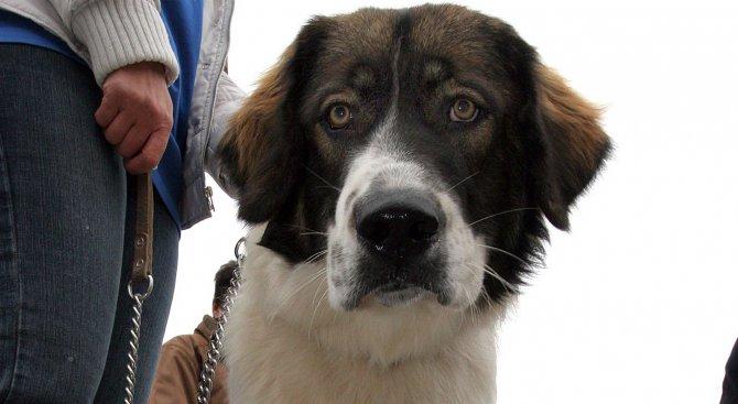 Над 300 кучета дефилираха на международна киноложка изложба в Разлог
