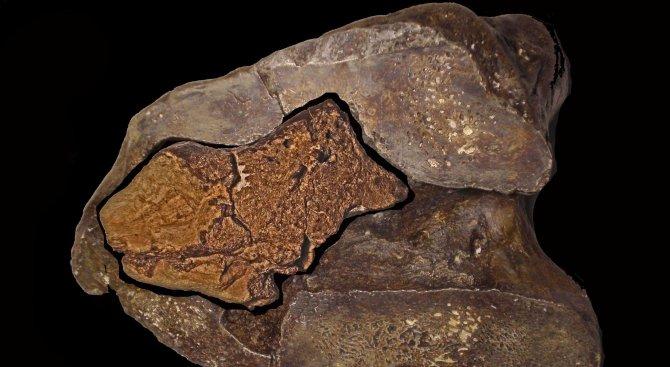 Откриха първия вкаменен динозавърски мозък