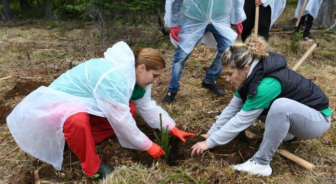 Повече от 200 широколистни и иглолистни дръвчета ще бъдат засадени в Ямбол