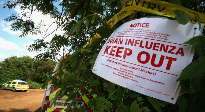 В Силистренско очакват атака от птичи грип след 1-ви януари