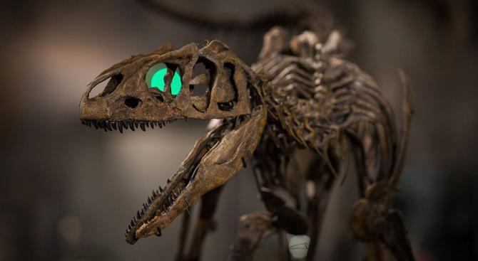 Скелет на динозавър е продаден на аукцион за 1 милион евро