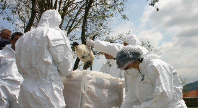 Варна свиква спешен щаб заради птичия грип