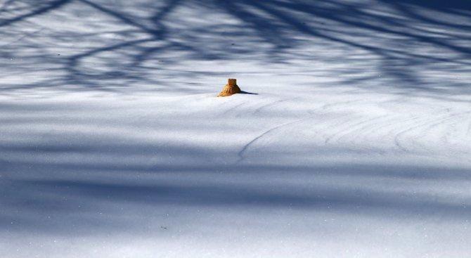 Днес се отбелязва Световният ден на снега