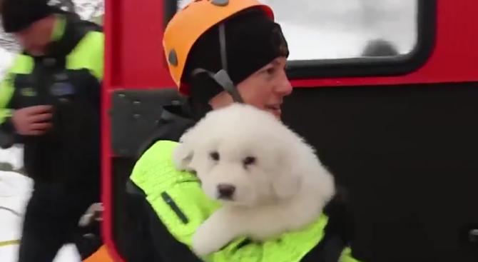 Три кученца са спасени от затрупания хотел в Италия (видео)