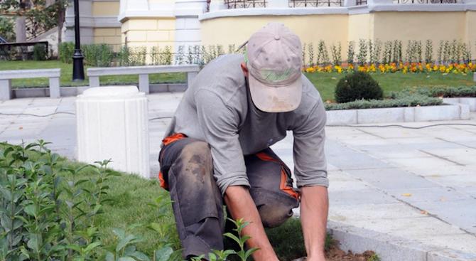 С 4 млн.лв. е увеличен бюджетът за озеленяване в София през тази година