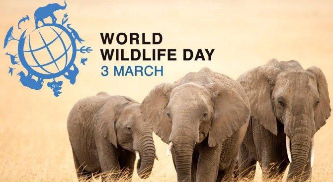 3 март е Ден на дивата природа