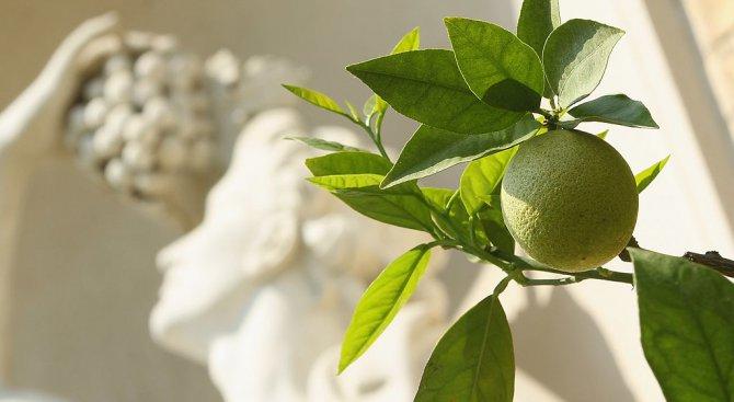 Хотелиер привлича туристи с домашно отглеждани лимони
