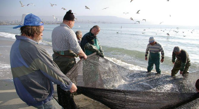 Експерт: Рибата, рапанът и мидата в Черно море намалява