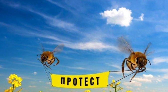Пчелари се вдигат на протест срещу неоникотиноидите