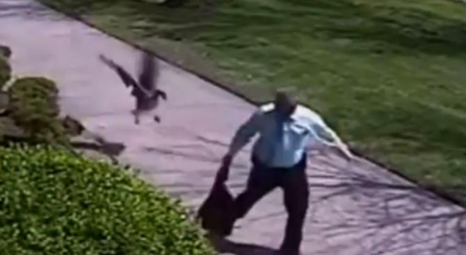 Агресивна гъска нападна полицай (видео)