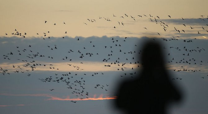 Укрития за наблюдение на птици ще бъдат изградени в Търговищко