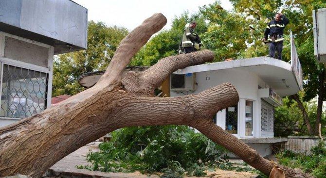 Дърво се стовари върху кабинката на митнически служители