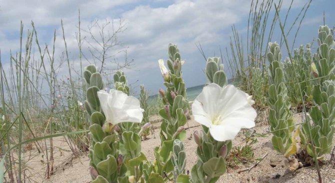 Проверяват състоянието на дюните на Южен и Централен плаж в Слънчев бряг