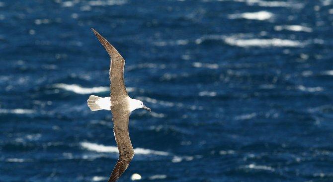 Учени броят застрашени птици от Космоса