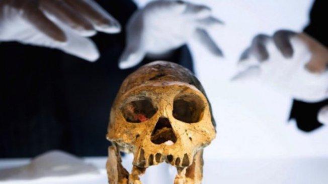 Най-древният предтеча на човека е живял преди 7,2 милиона години на Балканите