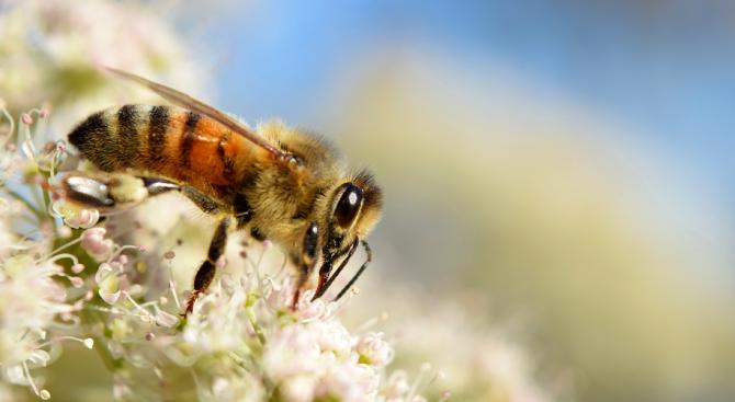 До 15 август се приемат заявления за субсидии от пчеларите