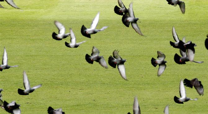 Полицията в Пазарджик за ден откри и върна откраднати елитни гълъби