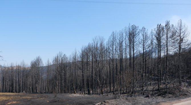 Еколог: Има предпоставки за екологична катастрофа в Пирин