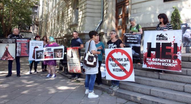 Веганите днес няма да протестират, но продължават да искат оставката на земеделския министър (видео)
