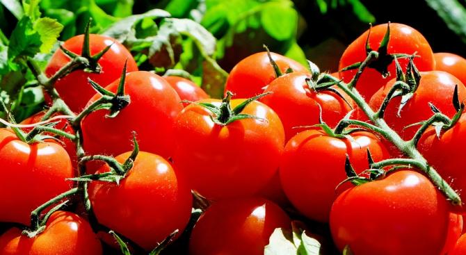 Оранжерийните домати поскъпват, краставиците поевтиняват