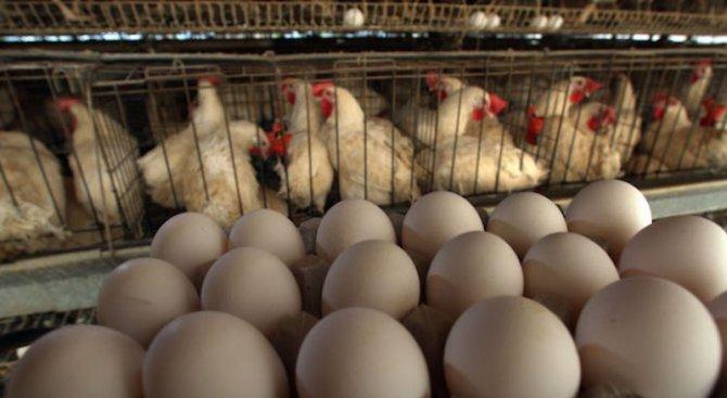 Обявиха повишена епизоотична готовност в Силистренско заради опасност от инфлуенца по птиците