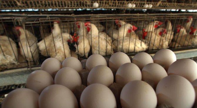 Птичи грип е регистриран в село Узунджово