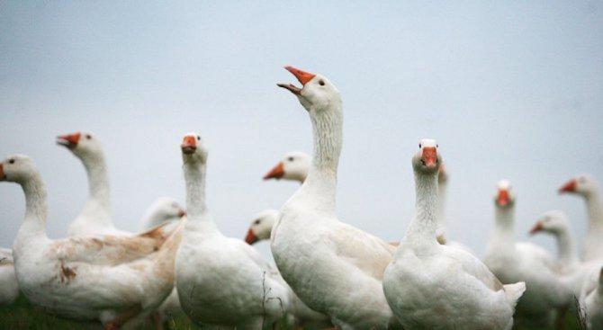 Забраниха пазари и изложби на птици в Пернишко
