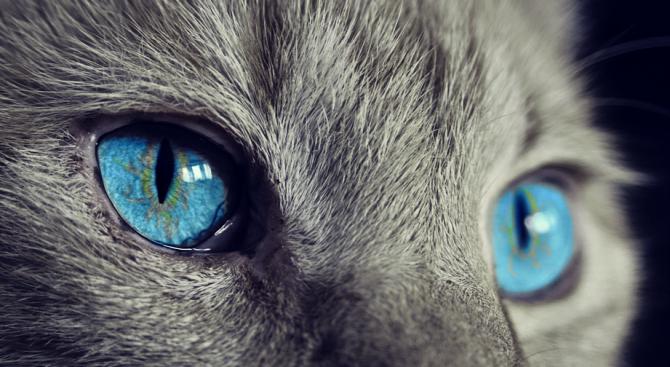 """Изложба на котки в Национален музей """"Земята и хората"""""""