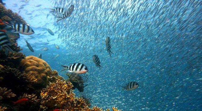 Изчезва рибата в световен мащаб заради замърсените води и свръх големия улов