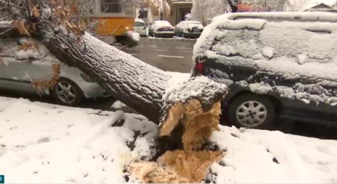Стотици паднали клони и дървета в столицата след обилния сняг