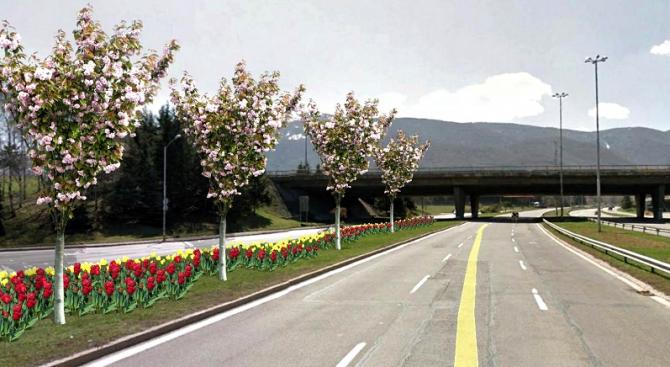 Над 100 000 луковици са част от цветните фигури в София за европредседателството