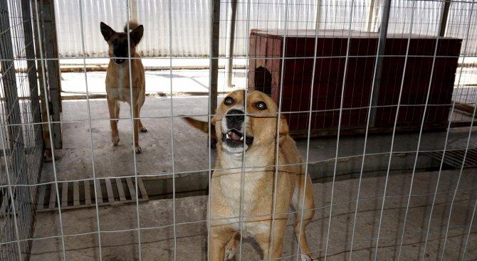 Община Балчик предприема мерки за контрол над бездомните кучета