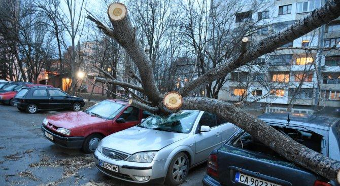 Паднали дървета потрошиха автомобили в София (снимки)